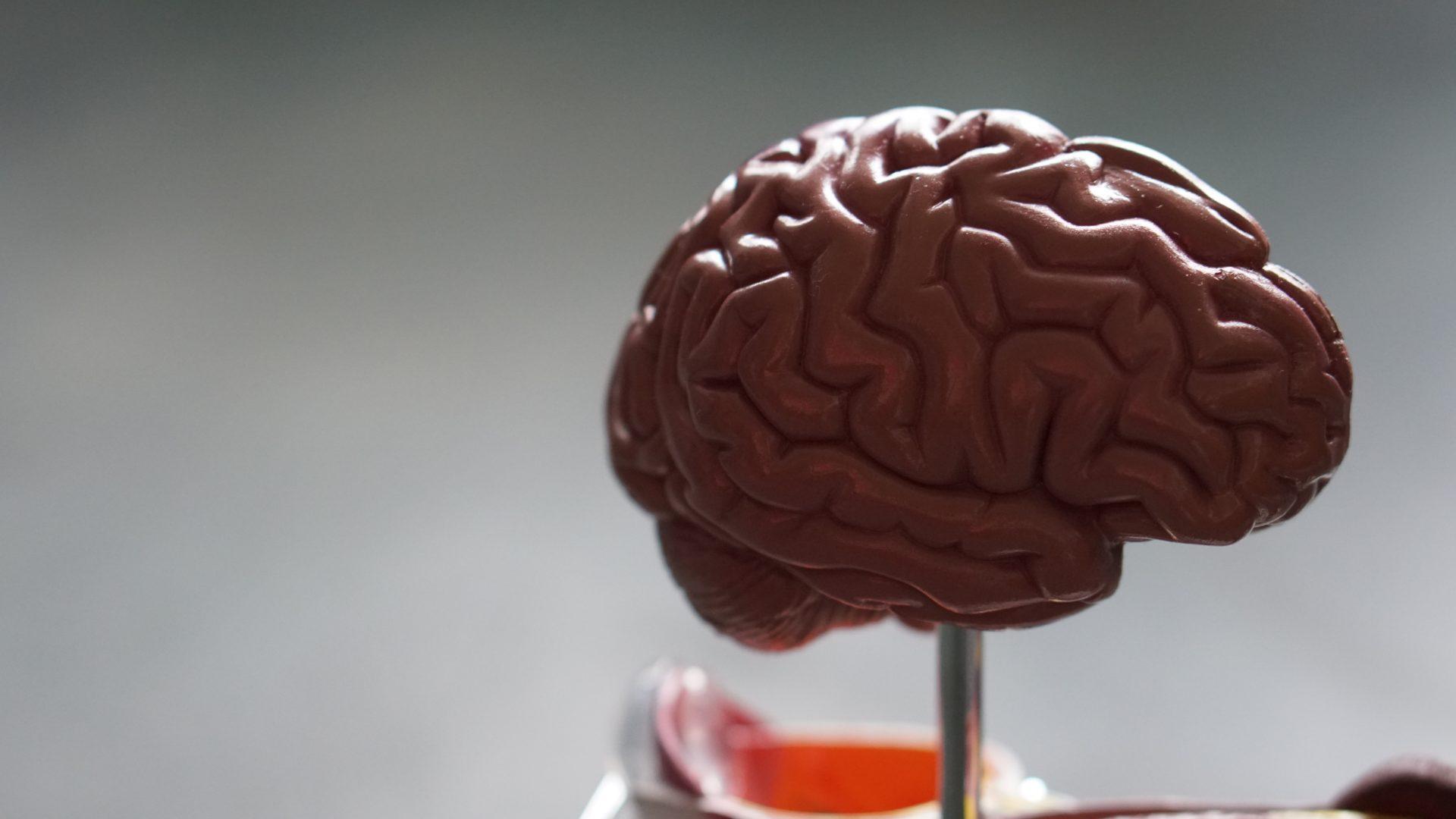 10 sprawdzonych sposobów na rozwój mózgu: Neurogeneza i neuroplastyczność